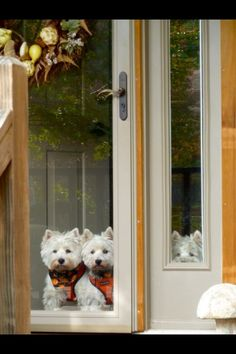 Looks like my 2 Westies when I pull up in the driveway from work! Love my babies so much. Beautiful Dogs, Animals Beautiful, Cute Animals, Beautiful Creatures, Funny Animals, Westies, Baby Dogs, Pet Dogs, Doggies