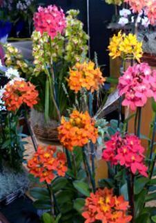 Orquídeas EPIDENDRUM Unusual Flowers, Gardening Tips, Flora, Cactus, Exotic, Landscape, Gardens, Hanging Plants, Wallpaper Quotes