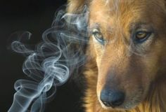 Does Second Hand Smoke Effect Dogs? #secondhandsmoke @Brendamcburnie