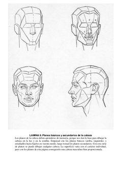 28 LAMINA 9. Planos básicos y secundarios de la cabeza Los planos de la cabeza deben aprenderse de memoria, porque nos dan...
