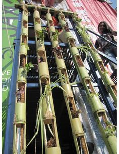 SBG thinks this is brilliant if you know someone who has a problem with invasive timber bamboo. Their solution is your budget solution. Vertical garden with bamboo. Cool, unique, twist on the vertical gardening trend Bamboo Planter, Bamboo Art, Vertical Planter, Bamboo Crafts, Bamboo Poles, Bamboo Fence, Concrete Fence, Metal Fence, Vertikal Garden