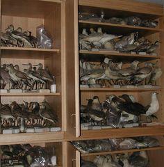 Deposito collezioni ornitologiche, Museo Storia Naturale, Venezia