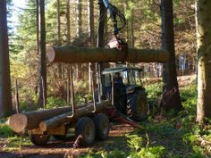 Pillars of Hercules, Fife. Picking up windblown logs which will be milled this week at the farm, turned into posts and planks for the new covered walkway across the decking http://www.organicholidays.co.uk/at/2875.htm