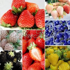 Apparently strawberries come in multiple colors!