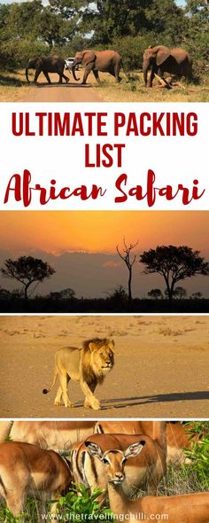 Ultimate packing list for an African safari