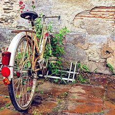 Cette semaine, on vous fait découvrir Bouchemaine !  Et pour commencer, cette belle photo d'un vélo vintage capturé de @son_of_a_hutch .  #Jaimelanjou #anjou #maineetloire #paysdelaloire #valdeloire #vélo #bicyclette #bouchemaine #instawalk #angersémoi #loirevalley #vintage #cycle #battleflowers #oldstreet #bike #cycling #cyclingphotos #cyclingshots