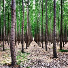 GreenWood Tree Farm, Oregon