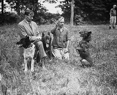 Balto may score the bigger headlines—not to mention a famous statue in Central Park—but the famous sled dog who helped deliver a shipment of antitoxins to Nome, Alaska during a 1925 diphtheria outbreak had a lot of help. Particularly from Togo, whose own team of fellow sled dogs traveled twice the distance of Balto's and traversed the 674-mile trek's most treacherous parts. But as it was Balto's team who finished the final leg of the journey, he's the one who grabbed most of the glory.