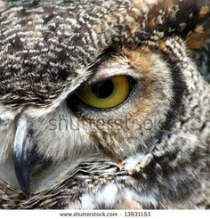 Great Horned Owl eye closeup by Joao Virissimo, via ShutterStock