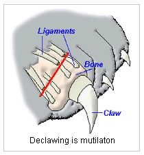 """the issue on the declawing of cats in the united states In many countries, the debate of the """"barbaric"""" nature of declawing is a non-issue, as laws are in place deeming it as such, and is illegal however, in the."""
