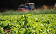 Πριμ 443 εκατ. σε γεωργούς και κτηνοτρόφους για βιολογικά προϊόντα Herbs, Plants, Herb, Plant, Planets, Medicinal Plants