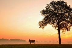 Landschap nabij Nijverdal, vroege lente ochtend