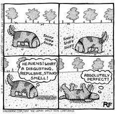 my dog does this!!...normally face first-which is lovely??!! ;)