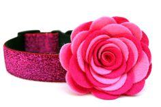 Dog Collar Flower Addon Felt Flower by Wagologie on Etsy Cute Dog Collars, Dog Collars & Leashes, Designer Dog Collars, Martingale Dog Collar, Felt Dogs, Dog Bows, Collar And Leash, Cool Pets, Felt Flowers