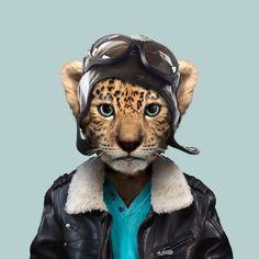 Amur Leopard - Panthera pardus orientalis