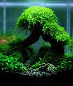 Nano aquascape, © George W. #AquariumTanksIdeas