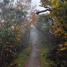Craggy Gardens, October 11, 2014 #nikon #craggygardens #blueridgeparkway #blueridgemoments #northcarolina #trees #trail #hiking #fall