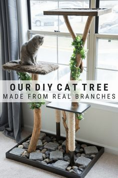 Make a DIY cat tree using real branches // DIY cat tree plans diy cats 857865429004309600 Cat Ideas, Niche Chat, Diy Cat Tower, Cat Tree Plans, Cat Towers, Cats Diy, Diy Cat Bed, Cat Room, Animal Projects