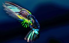 Hummingbird on wings by Attila Molnar