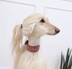 Is it difficult to care for the wool of an Afghan hound? Yes, caring for Afghan wool is not an easy job. But our care tips will teach you how to deal with it quickly and easily. Cute Funny Animals, Funny Animal Pictures, Cute Baby Animals, Funny Dogs, Animals And Pets, Cute Dogs, Humorous Animals, Animal Pics, Beagle Funny