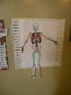 A Fun Unit on the Skeletal System complete with pictures and resource suggestions. http://thebookmom.hubpages.com/hub/A-Skeleton-Unit-Fun-Ideas-to-Teach-Kids-About-Bones