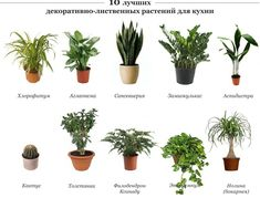 10 лучших растений для кухни