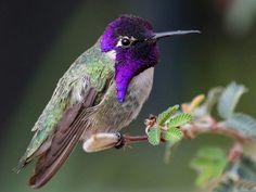 amazing bird photography - Buscar con Google