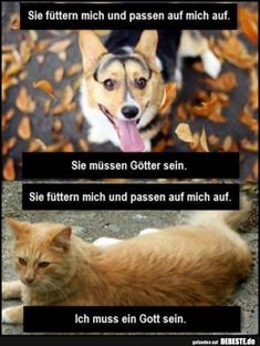 Hilarious Cat Vs Dog Memes That Settles The Fight Cat And Dog Videos, Funny Cat Videos, Funny Animal Pictures, Funny Photos, Funny Cats And Dogs, Silly Cats, Cute Cats, Cat Fun, Funny Animal Memes