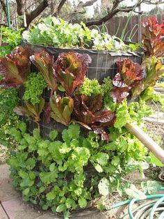 ** vertical garden - compost bin  http://johnzlatnik.blogspot.com/search/label/vertical%20garden