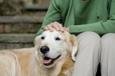 Like the humans who care for them, older dogs are not exempt from the battle of the bulge. Here's how to prevent canine obesity in senior dogs. Bathing A Puppy, Old Dogs, Live Long, Doberman, Beautiful Soul, Doge, Dog Owners, Labrador Retriever, Puppies