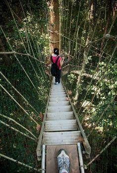 Taman Negara canopy walkway - Titiwangsa Mountains - Malaysia