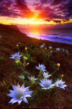 Pretty Flowers with Pretty Sunset