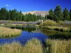Beaver Ponds in Sun Valley Idaho
