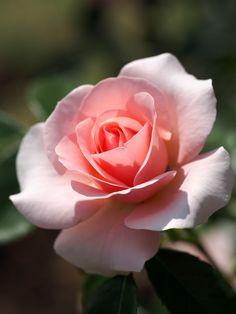 Argile rose : absorbante, purifiante, apaisante, non allergisante Beurre de karité bio : nourrissant, réparateur, anti-desséchant, protecteur