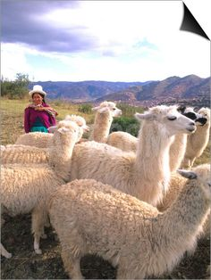 Inca Woman in Costume with Llamas, Cuzco, Peru SwitchArt™ Print by Bill Bachmann at Art.com
