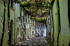 Located in Andalusia, Spain, Jerez de la Frontera is a city known for its exquisite wine. Here, a street in the historic center is shaded by grape leaves from vines grown along the surrounding walls.