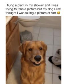 "💥Develop your dog's ""hidden intelligence"" To eliminate bad behavior and create the obedient, well-behaved pet of your dreams 🧠🐶 DISCOVER HOW 🧠🐶👇 Funny Animal Jokes, Funny Animal Pictures, Cute Funny Dogs, Cute Funny Animals, Funny Dog Videos, Cute Animal Videos, Cute Little Animals, Dog Memes, Animals Beautiful"