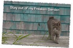 CAT DETERRENT - No one enjoys a cat using your garden as a litter box! Click the picture to find out how to make cats take their business elsewhere.