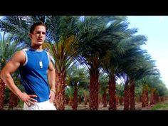 Medjool Palm Tree! http://www.tytyga.com/Medjool-Date-Palm-p/medjool-date-palm-tree.htm