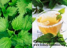 Is Nettle Tea Good for Chronic Kidney Disease Patients  http://www.kidney-treatment.org/ckd-treatment/457.html