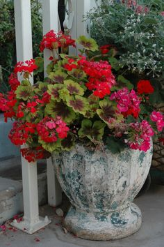 container garden with #geraniums