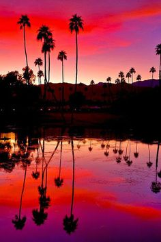 Palm Trees silhouetted against a purple sunset sky, California