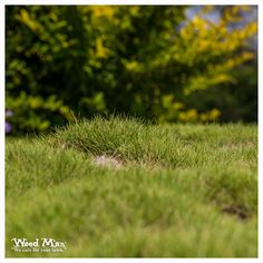 "Have you noticed ""clumps"" of turf in your yard? In reality, your lawn has simply become severely uneven and bumpy. Schedule a complimentary lawn analysis with Weed Man today! But, before you do that, learn more about Battling Uneven Turf. Weeds In Lawn, Lawn Care Tips, Background Images Hd, Green Lawn, Do It Yourself Projects, Schedule, The Good Place, Yard, Timeline"