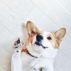 Image via We Heart It https://weheartit.com/entry/170862980 #dog