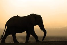 Passage To Africa - Amboseli - Kenya #Elephant #Silhouette