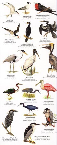 Birds of Costa Rica  www.facebook.com/freezefotografie
