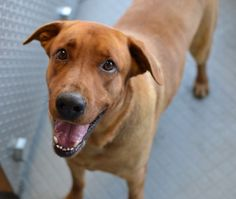 Hi, I'm Smokey. I'm a great fella that gets along well with everyone! I enjoy going for walks and exploring new places. I'm a really cheerful guy and I love belly rubs. My laid back personality will make me a perfect fit for you! I'm about 3 years old and I get along great with other dogs. Right now I'm in a foster home, but I'd love to become a part of your family today.