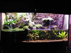 Paludarium Construction Photo Journal - Page 2 - Dendroboard Terrarium Tank, Frog Terrarium, Terrariums, Reptile Cage, Reptile Enclosure, Turtle Habitat, Background Diy, Animal Room, Vivarium