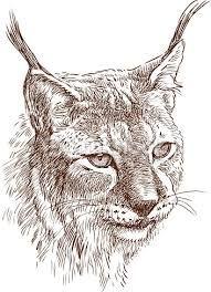 """Résultat de recherche d'images pour """"lynx dessin"""""""