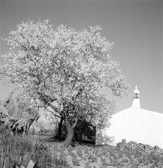 Ai mê rico Algarve!: Algarve em flor